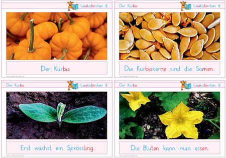 lesekaeferchen-6-der-kuerbis - Zaubereinmaleins - DesignBlog