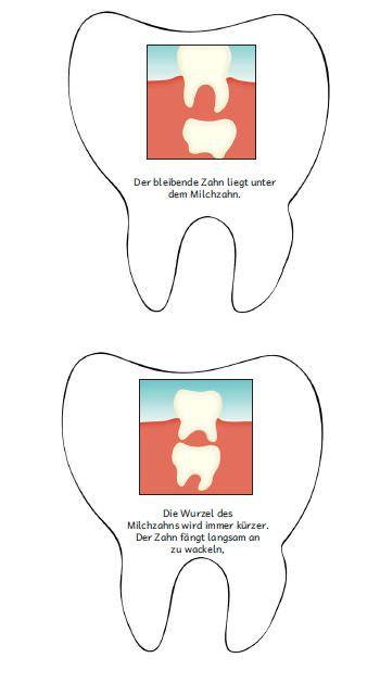 vom-milchzahn-zum-bleibenden-zahn - Zaubereinmaleins - DesignBlog